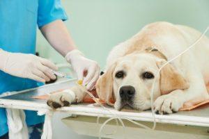 Blasen- und Nierenkrankheiten beim Hund