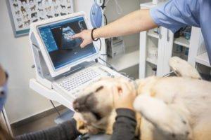 Kaiserschnitt beim Hund