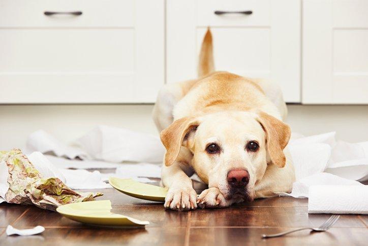 Labrador Hundehaftpflicht