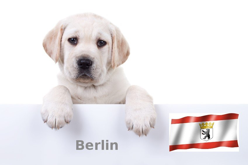 Labrador Züchter Berlin