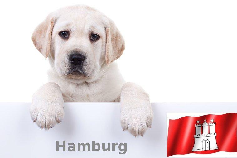Labrador Züchter Hamburg