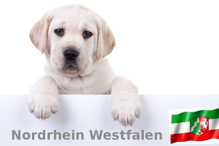 Labrador Züchter Nordrhein-Westfalen