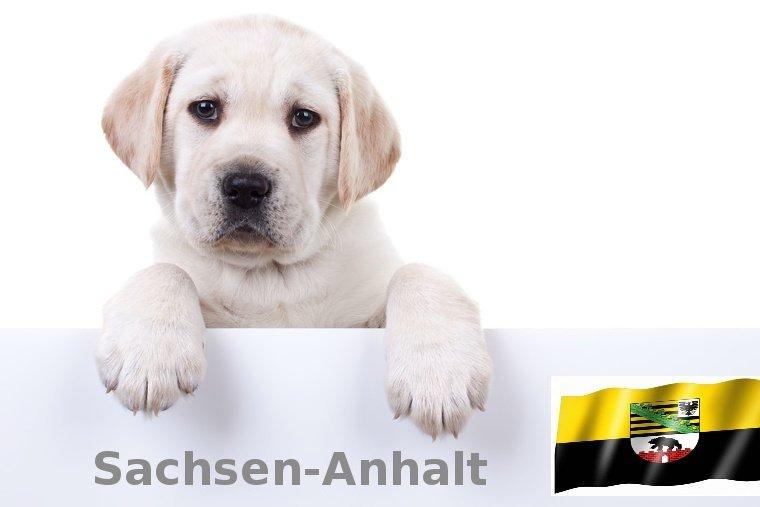 Labrador Züchter Sachsen-Anhalt