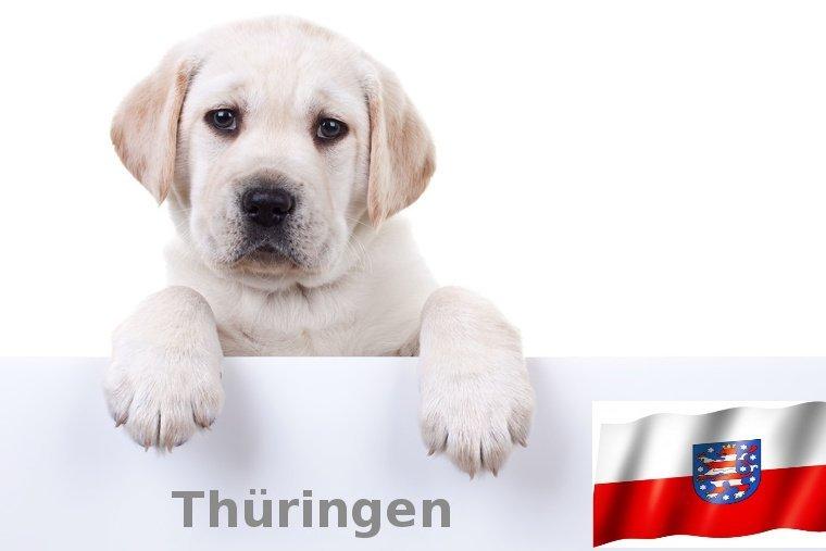 Labrador Züchter Thüringen