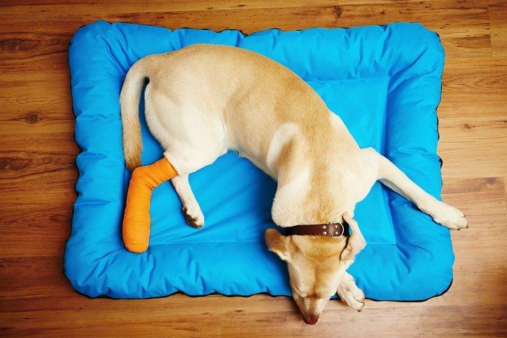 Bänderriss beim Hund