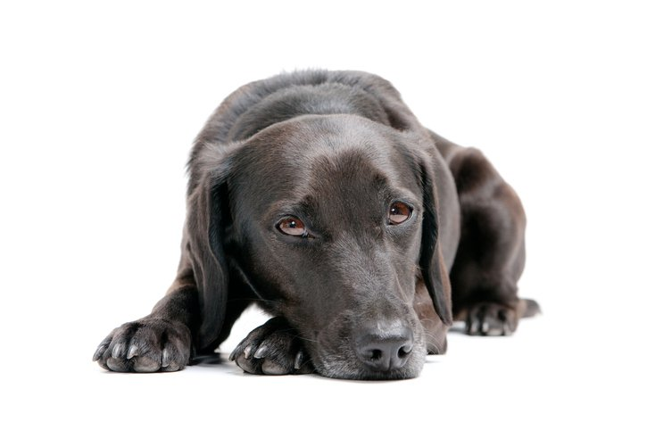 Eierstockentzündung beim Hund