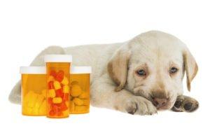 Labrador Myopathie