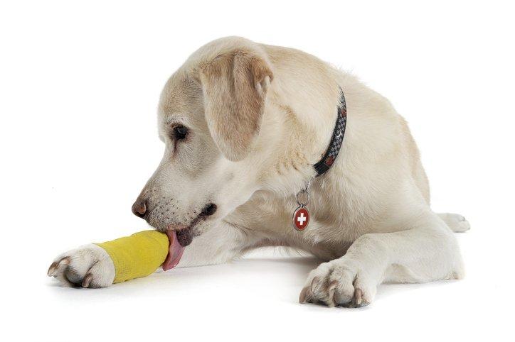 Lipom beim Hund