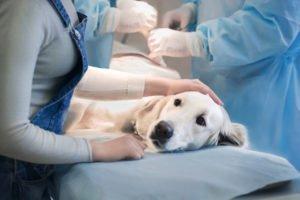Tumor beim Hund